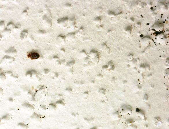Popcorn Ceiling Bed Bugs