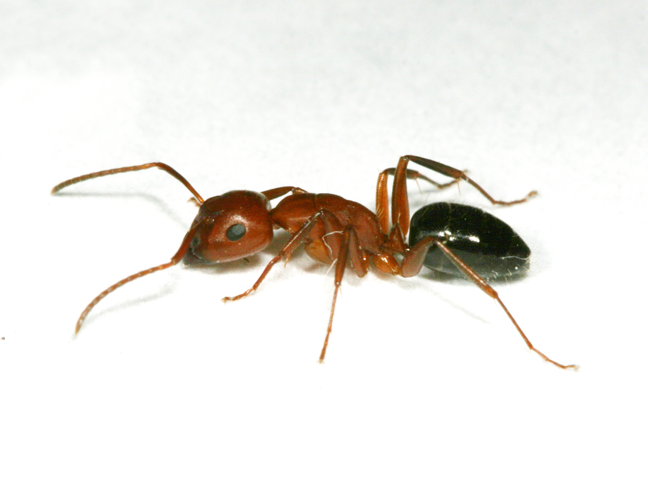 When ants invade - Insects in the City